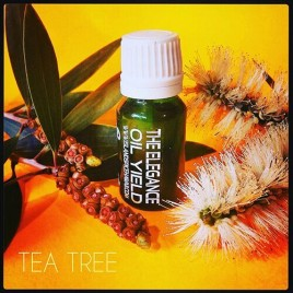 Tea Tree – Melaluca Essential Oil
