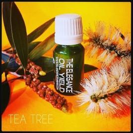 Tea Tree – Melaluca Essential Oil