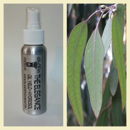 Eucalyptus Hydrosol (2 Fl Oz) Spray Bottle